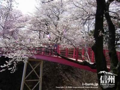 橋と桜がとてもキレイ
