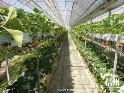 二段の水耕栽培