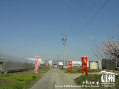 のどかな農道