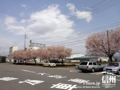 駐車場に散りかけの桜
