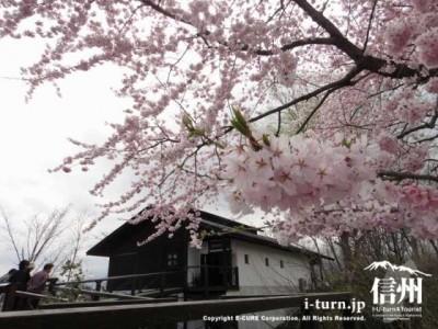 百楽桜と記念館