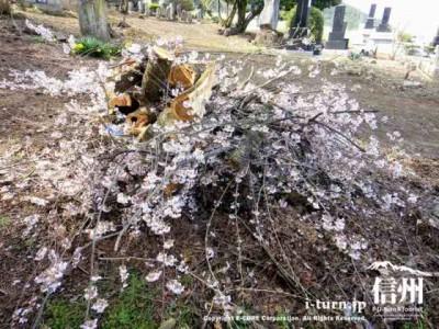 落ちた枝など