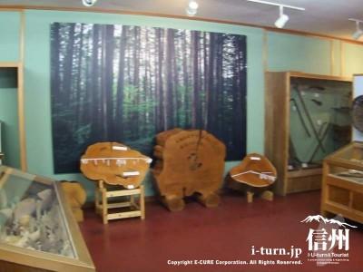 ヒノキの年輪も展示してあります