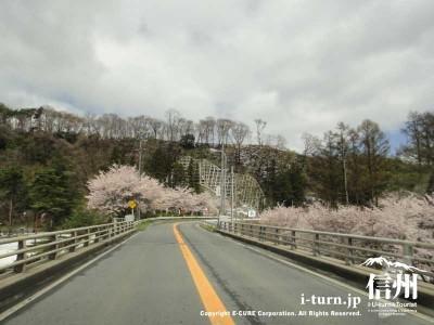 農道からも桜が見えます