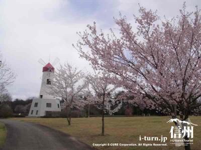 桜と時計台