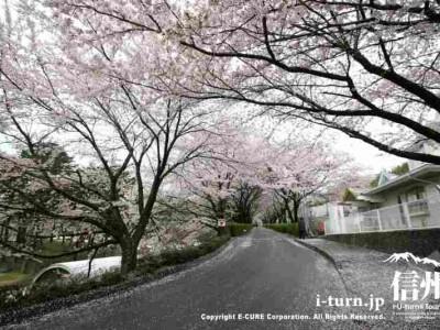 帰りも桜トンネルを通過します