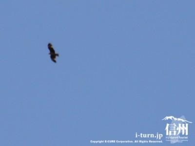空飛ぶトンビ