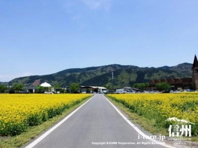 道の両脇が菜の花畑