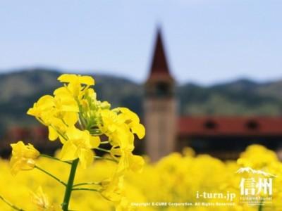 菜の花のバックにスイス村