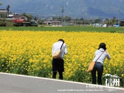 写真を撮る観光客