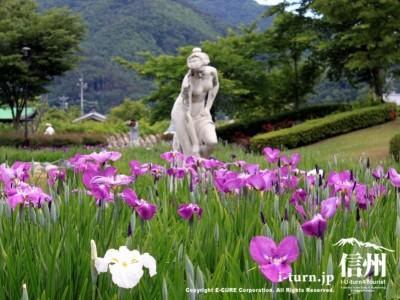 花菖蒲咲く中に銅像