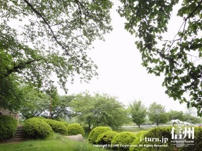桜の木が公園とグランドを囲います