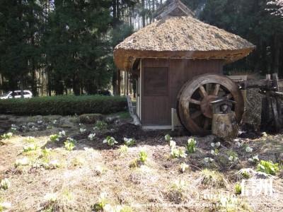 水車小屋と水芭蕉の湿地帯