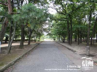 公園林の散歩道