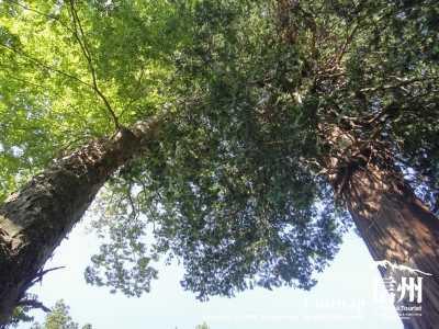真上は大木の木々