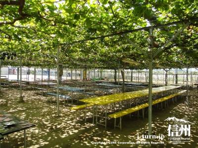 ブドウの下の休憩スペース