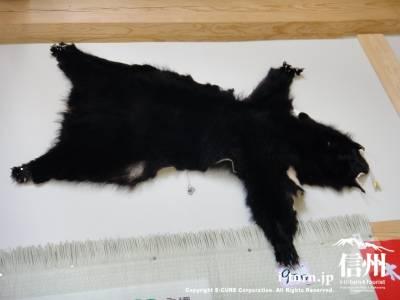 クマの毛皮