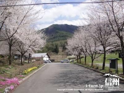かやぶきの入口桜並木