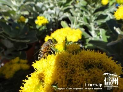 蜜蜂がたくさん来てました