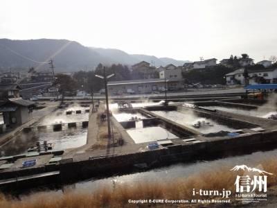 虹鱒の養殖所