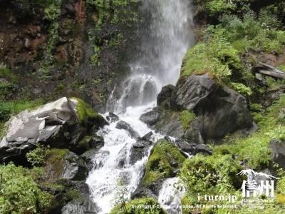 千ケ滝の滝壷Ⅴ周囲に生す苔
