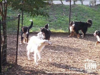 湯川ふるさと公園のドックランにいる犬達