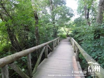 遊歩道Ⅳ(木の橋)