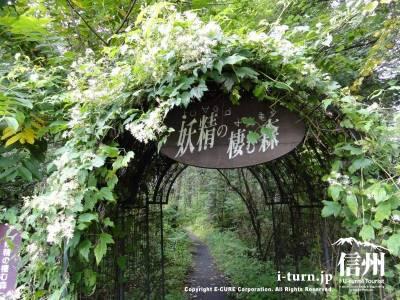 妖精の棲む森の入口