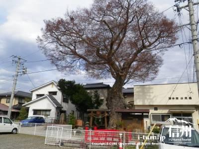 大きな木が目印