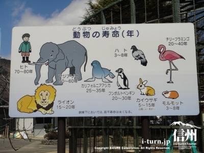 動物の寿命