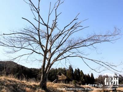 葉っぱのない木