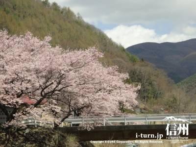山と桜と川と橋