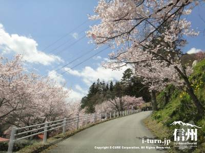 弘妙寺へ登る舗装道路