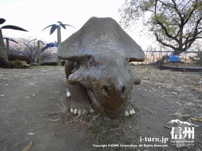 17プロトケラトサウルス