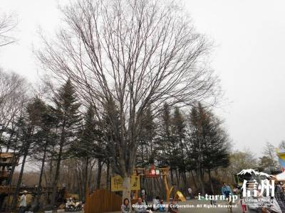 ねがいごとの木
