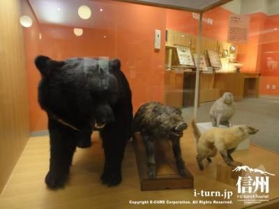 熊やイノシシの剥製