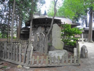 天然記念物の木の幹