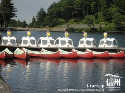 ハクチョウのペダルボートと貸しボート