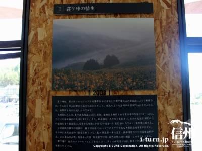 霧ヶ峰の植生