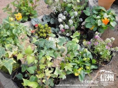 百白花の庭に使われた花