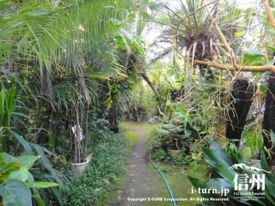 熱帯植物園の中