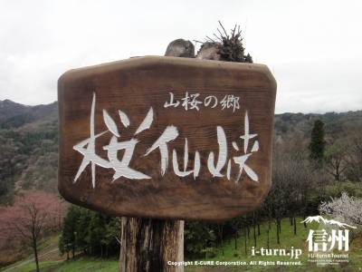桜仙峡の木製看板