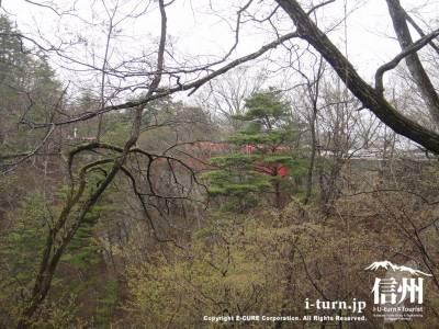木の間に見える赤い橋