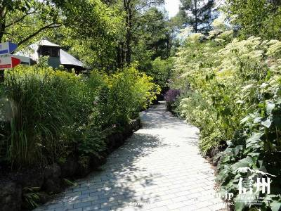 ピクチャーレスガーデンの庭内Ⅳ