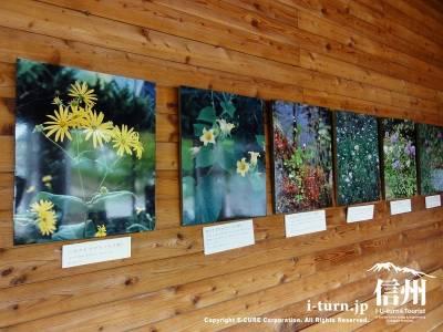 軽井沢植物園資料室の写真パネル