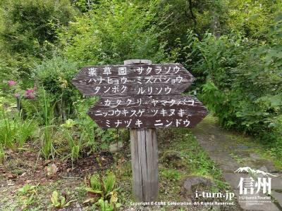 軽井沢植物園内⑤植物案内