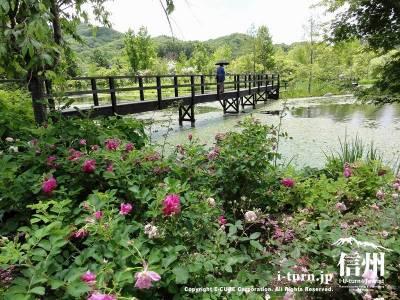 湖上の架け橋