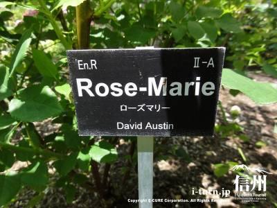 Rose-Marie(ローズマリー)