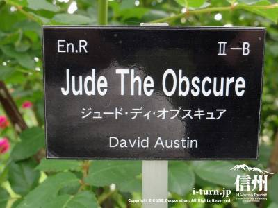 Jude The Obscure(ジュード・ディ・オブスキュア)