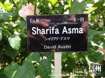 Sharifa Asma(シャリファ・アスマ )